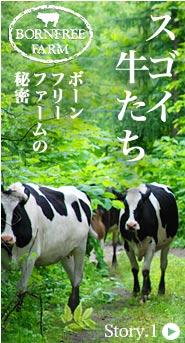 牛とろ物語-スゴイ牛たち